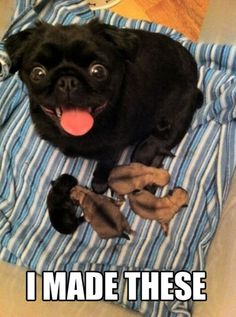 Bahahaaaa!!!! This dog goes perfectly with the saying!!! Look at those cute buggy eyes!!! Lol