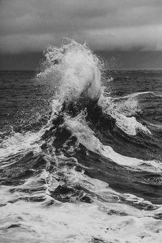 p e l a g i c •   the sea  