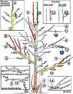 Pruning an apple tree. Fruit ABC: www.be Pruning an apple tree. Diy Herb Garden, Garden Trellis, Fruit Garden, Easy Garden, Garden Plants, Garden Ideas, Small Backyard Gardens, Small Gardens, Backyard Trees