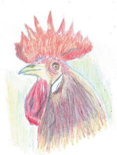 coloured pencils Coloured Pencils, Rooster, Animals, Color, Collection, Design, Art, Animales, Colour