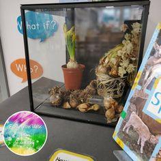 My Curiosity Cube contains bulbs Eyfs Classroom, Classroom Decor, Preschool Science, Science Activities, Sensory Bins, Sensory Play, Curiosity Approach Eyfs, Investigation Area, Curiosity Box