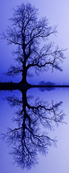 Tree Skeleton Reflection | A1 Pictures