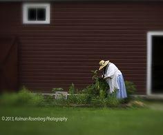 The Dye Garden, Hale Farm and Village,  shot with the Lensbaby, 2013 By Kolman Rosenberg