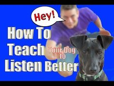 Playlist: A Step by Step Guide to Teaching Your Puppy or Dog (in order) - YouTube