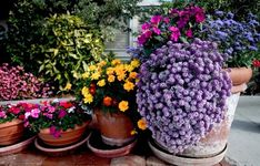 I love gardening in pots.  Flowers change with seasons and there is always a splash of color.