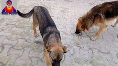 Sokak Hayvanlarını Besleyelim Corgi, Animals, Corgis, Animales, Animaux, Animal, Animais