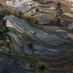 Yuanyang Rice Terrace Fields