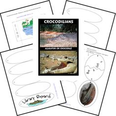 "Crocodilians Lapbook use with ""The Selfish Crocodile"""