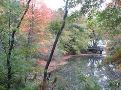 NewYork Central park