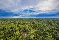 Retour critique sur les photos prises de tribus amérindiennes retranchées dans la forêt amazonienne.