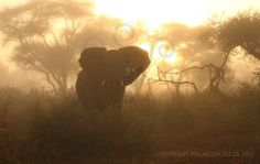 Elephant Silhouette - Pafuri, South Africa