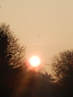 bird and sunrise