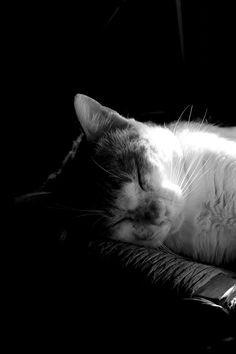 .La siesta
