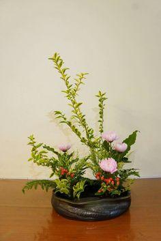 Esotica giardino pianta semi inverno sementi Exot erbe Curry arbusto