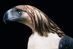 Portraits of Endangered Animals