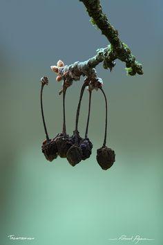 La fin | The End: http://tazintosh.com #FocusedOn #Photo #Arbre #Tree #Arrière-plan #Background #Bokeh #Branche #Branch #Brindille #Twig #Canon EF 180mm f/3.5L Macro USM #Canon EOS 5D Mark II #Cerise #Cherry #Cerisier #Cherry tree #Flou #Blur #Fruit #Lichen #Mort #Dead #Mousse #Moss #Pourri #Rotten #Profondeur de champ #Depth of field #Sec #Dry / Dried #Tige #Stem