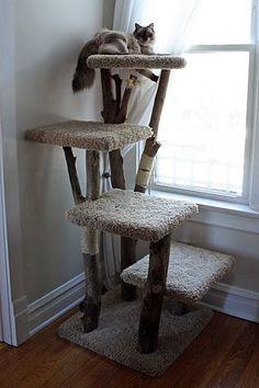 Platform 4 level #treecondo - Understanding your cat better at - http://Catsincare.com!
