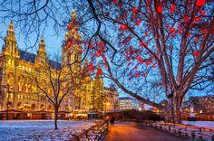 Viena Áustria Casa Tardinha Ano-Novo árvores Galho Torre Cidades