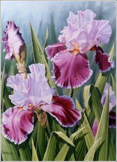 ROSE PRINCESS IRIS - oil painting by Judy Sleight