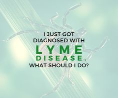 Welcome to the school of Lyme. 6 tips for those newly diagnosed with Lyme disease.   by Jennifer Crystal Every day, I receive emails from people who have recently been diagnosed with Lyme disease. As ...MORE