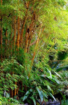 Fotograf Disney Jungle Cruise von Nate A auf Bamboo Landscape, Bamboo Canes, Lucky Bamboo, Walking In The Rain, Nature Photography, Cruise, Pictures, Palm, Trees