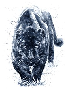 Find Panther Watercolor Painting stock images in HD and millions of other royalty-free stock photos, illustrations and vectors in the Shutterstock collection. Thousands of new, high-quality pictures added every day. Animal Jaguar, Black Panther Drawing, Black Panther Tattoo, Wildlife Paintings, Animal Paintings, Animal Drawings, Wildlife Art, Art Drawings, Jaguar Tattoo