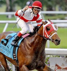Friesan Fire, winner of the 2009 Louisiana Derby-G2 and favorite in that year's Kentucky Derby-G1, retired from racing in 2011. Photo courtesy of Alexander Barkoff | Associated Press