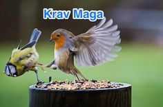 Funny pictures about Angry Birds In Real Life. Oh, and cool pics about Angry Birds In Real Life. Also, Angry Birds In Real Life photos. Funny Animal Quotes, Funny Animal Pictures, Animal Memes, Funny Animals, Cute Animals, Bird Pictures, Funny Images, Funny Photos, Birds Pics