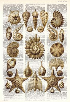 Book Print Dictionary or Encyclopedia Page Print- Book print Set Collage Shell Original  Vintage Design Print on Old Book art.