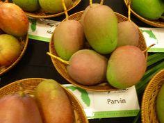International Mango Festival in July