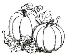 Pumpkin Vine Coloring Pages one of the most popular coloring page in Pumpkin category. Explore more coloring pages like Pumpkin Vine Coloring Pages from the Coloring. Pumpkin Coloring Pages, Fall Coloring Pages, Printable Coloring Pages, Adult Coloring Pages, Coloring Books, Halloween Coloring Pages, Free Coloring, Halloween Images, Fall Halloween