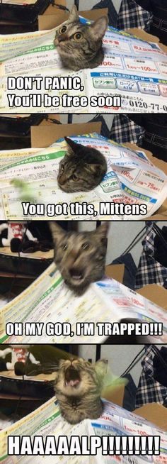 Funny Cats - Funny Animal Quotes - - Look at that second last phase the realisation The post Funny Cats appeared first on Gag Dad. Cute Animal Memes, Funny Animal Quotes, Animal Jokes, Cute Funny Animals, Funny Animal Pictures, Cute Baby Animals, Funny Photos, Zoo Animals, Funny Animal Fails