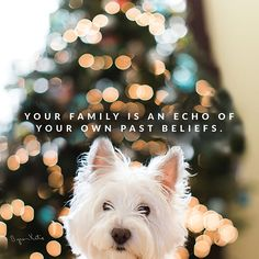 Your family is an echo of your own past beliefs. Byron Katie, Seeing You Quotes, Super Soul Sunday, Smart Quotes, Sunday Quotes, Meditation Quotes, Choose Life, Positive Life, Positive Quotes