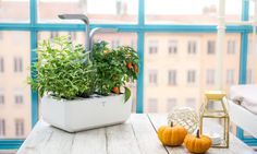 The finest indoor gardens to give your green-thumbed (and even black-thumbed) loved ones this year.