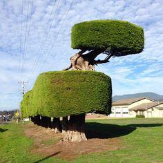 Деревья, которые хотят, чтобы их сфотографировали Unique Trees, Old Trees, Big Tree, Tree Forest, Cool Plants, Amazing Flowers, Tree Of Life, Amazing Nature, Driftwood