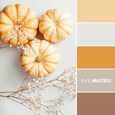 Flat lay composition of small pumpkins on a white background with decor The concept of Thanksgiving and Fall time Color Palette #393 – Ave Mateiu - Fall Autumn 2020, color palette, color palettes, colour palettes, color scheme, color inspiration, color combination, art tutorial, collage, digital art, canvas painting, wall art, home painting, photography, weddings by color, inspiration, vintage, wallpaper, background, rustic, seasonal, season, natural, nature