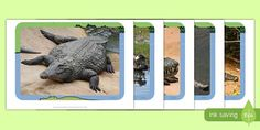 Search for Primary Resources, teaching resources, activities Primary Resources, Teaching Resources, The Enormous Crocodile, Activities, Search, Crocodiles, Searching