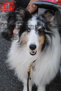 What Kennel Training A Dog Advice Owner Needs To Know >>> You can find more details by visiting the image link. Kennel Training A Dog, Crate Training, Dog Training Tips, Stress And Anxiety, Your Pet, Have Fun, Image Link, Advice, Puppies