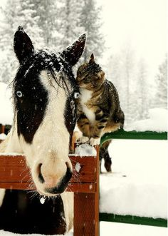Horse and Cat Friends