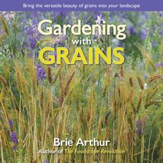 Buy Gardening with Grains: Bring the Versatile Beauty of Grains to Your Edible Landscape by Brie Arthur and Read this Book on Kobo's Free Apps. Discover Kobo's Vast Collection of Ebooks and Audiobooks Today - Over 4 Million Titles! Flower Bed Designs, Planting Shrubs, Foundation Planting, Homemade Beer, Ancient Beauty, Ornamental Grasses, Zinnias, Flower Beds, Garden Planning