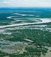 Bosques desarrollados sobre orillares en la planicie de inundación del río Meta.