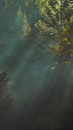 Tree Wallpaper Iphone, Wood Wallpaper, Wallpaper For Your Phone, Trendy Wallpaper, Nature Wallpaper, Wallpaper Backgrounds, Iphone Backgrounds, Wallpaper Paisajes, Wallpapers En Hd