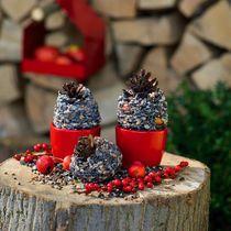 Birdfeed nice arranged - very decorative #christmas Arrangement www.barendsen.nl
