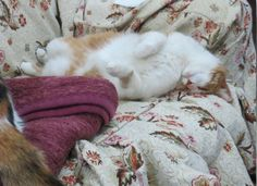 she sleeps like a derp and i love it   http://ift.tt/1p1q8vJ via /r/cats http://ift.tt/1WWJn3P  cats funny pictures