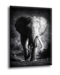 This Elephant Bull Animal Canvas Wall Art giclee print is created using fade resistant inks and gallery-wrapped giving it a museum quality finish. Elephant Spirit Animal, Elephant Love, Elephant Art, Elephant Tattoos, African Elephant, Elephant Poster, White Elephant, Elephant Photography, Wildlife Photography