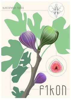 Fikon II - Liten illustration /vykort, 14x20cm