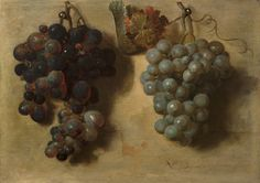 Nicolas de Largillière (Paris 1656-1746 Paris) Two bunches of grapes Panel, 24.5 x 34.5 cm; signed and dated 1677  Despite the simplicity of the motif, these bunches of grapes reflect the painter's ambition in the early years of his career (this painting is one his first dated works). The allusion to the story, recorded by Pliny, of the artist Zeuxis, who painted such convincing grapes that birds tried to peck at them, would not have escaped the seventeenth-century viewer.