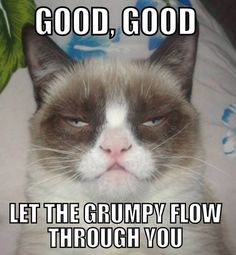 Grumpy cat Memes is one of the most famous cats on internet.Today we collect Grumpy cat Memes morning that are so hilarious and humor.Just read out these Grumpy cat Memes morning. Grumpy Cat Good, Grumpy Cat Quotes, Funny Grumpy Cat Memes, Funny Cats, Funny Jokes, Grumpy Kitty, Kitty Cats, Memes Humor, Derpy Cats