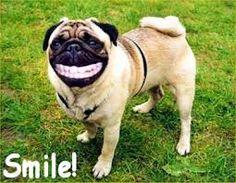 Afbeeldingsresultaat voor funny dieren