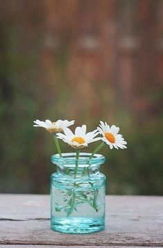 daisy and a beautiful blue vase Little Flowers, My Flower, Beautiful Flowers, Simply Beautiful, Sunflowers And Daisies, Wild Flowers, Daisy Love, Deco Floral, Foto Art